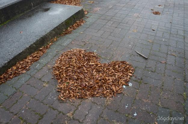 秋吉台サファリランドの落ち葉
